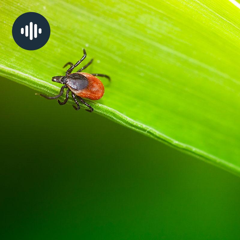 Avoir peur des tiques? Gros plan sur la maladie de Lyme
