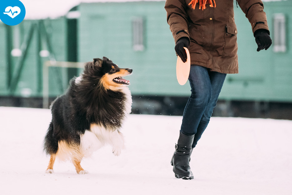 3 activities you can do with your dog