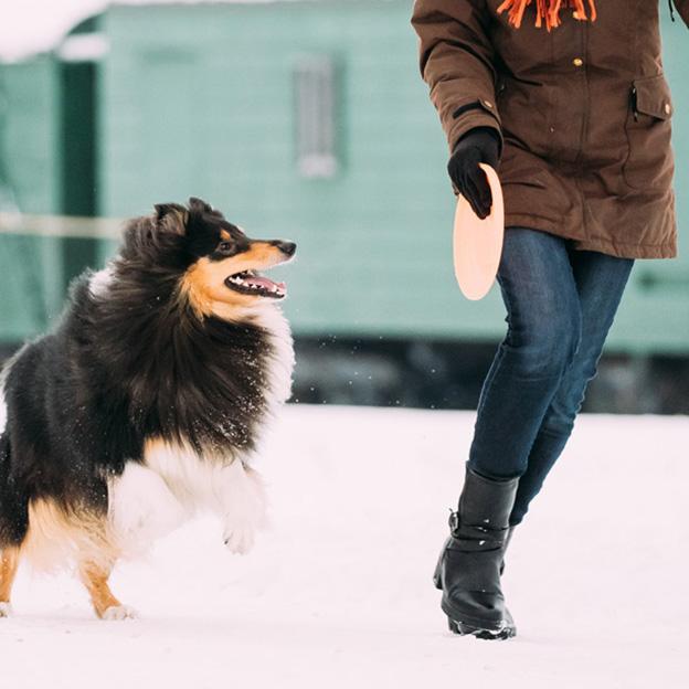3 activités à faire avec son chien