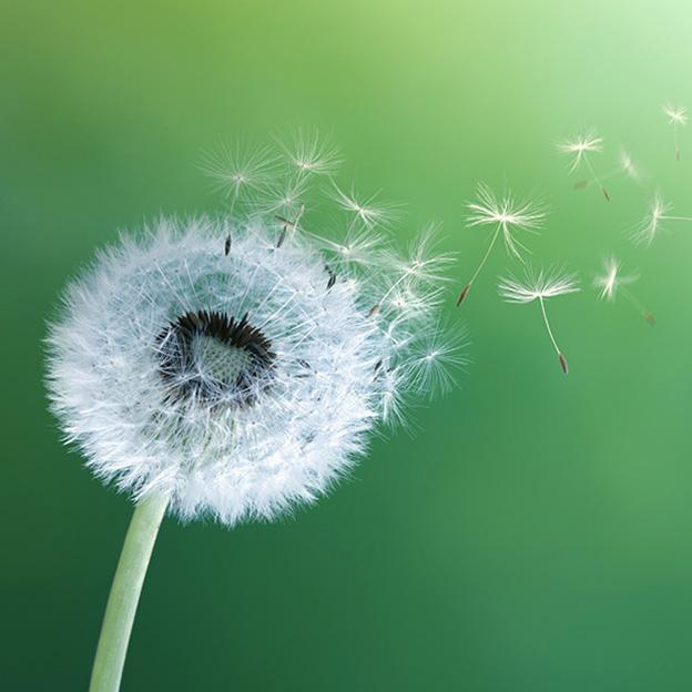 Choosing the right medication for seasonal allergies
